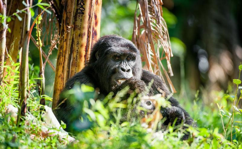 Beste Reisezeit und Klima für Ruanda