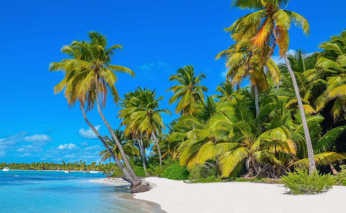Palmen am Sandstrand auf Dominica