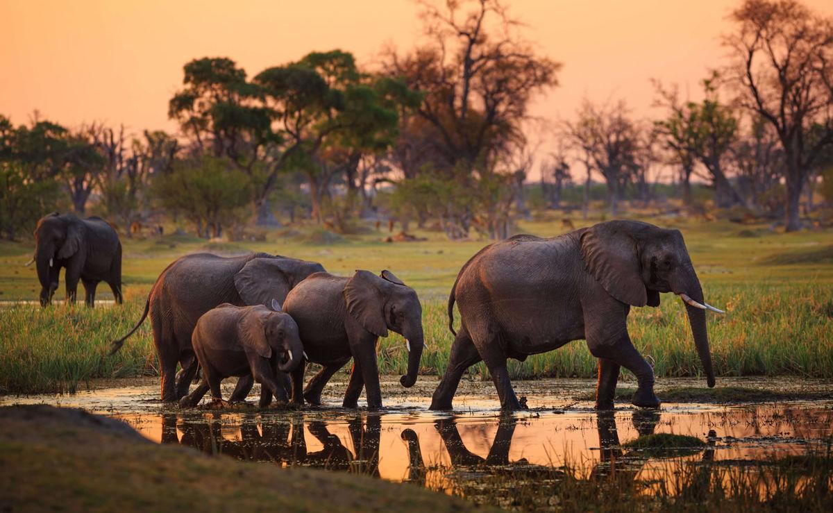 Elefanten im Moremi Nationalpark in Botswana