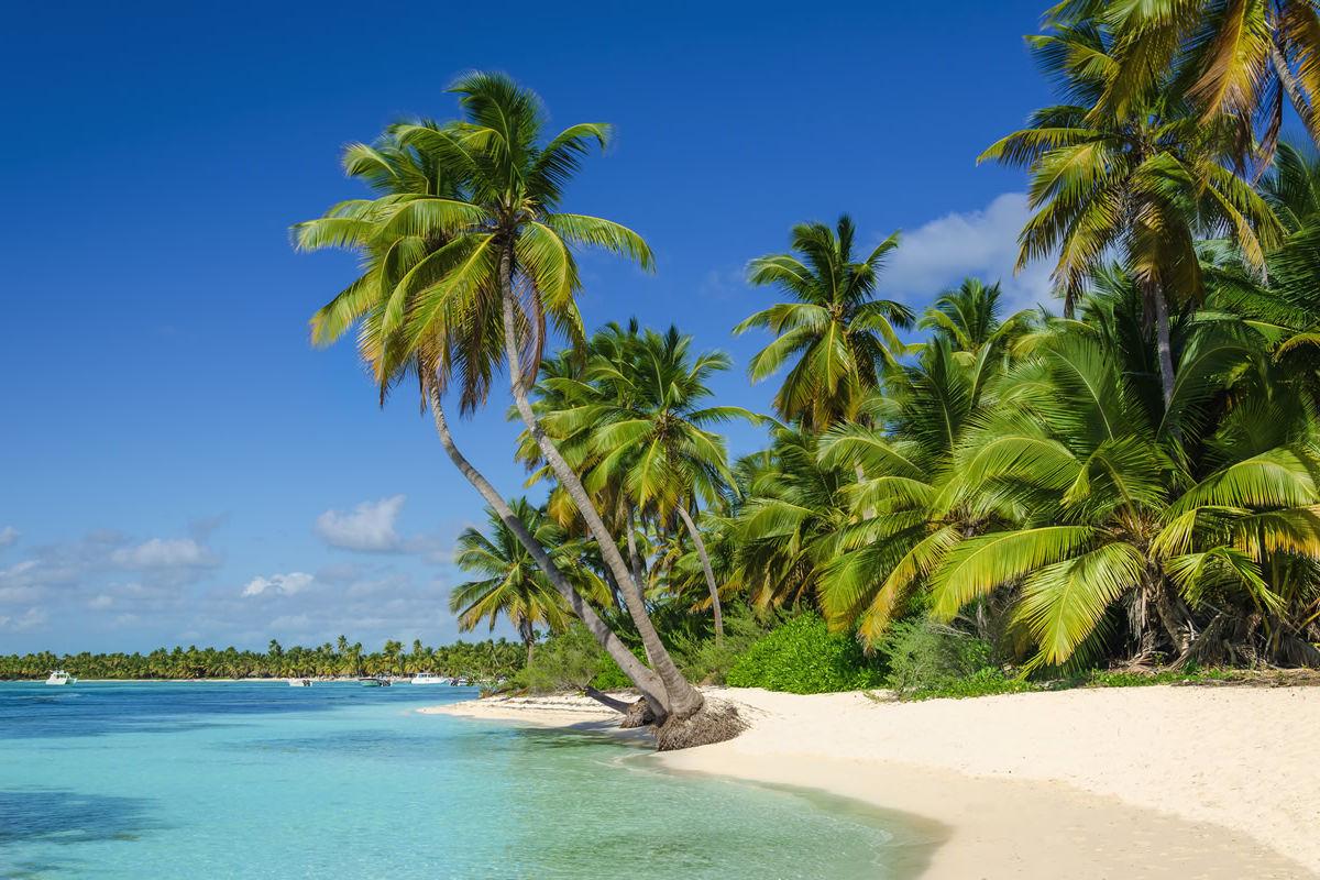 Palmen am Strand von Aruba