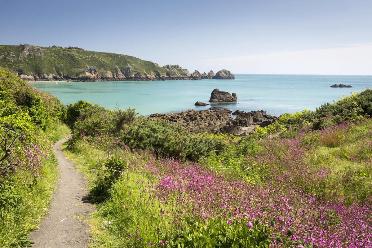 Wildblumen an der Küste von Guernsey